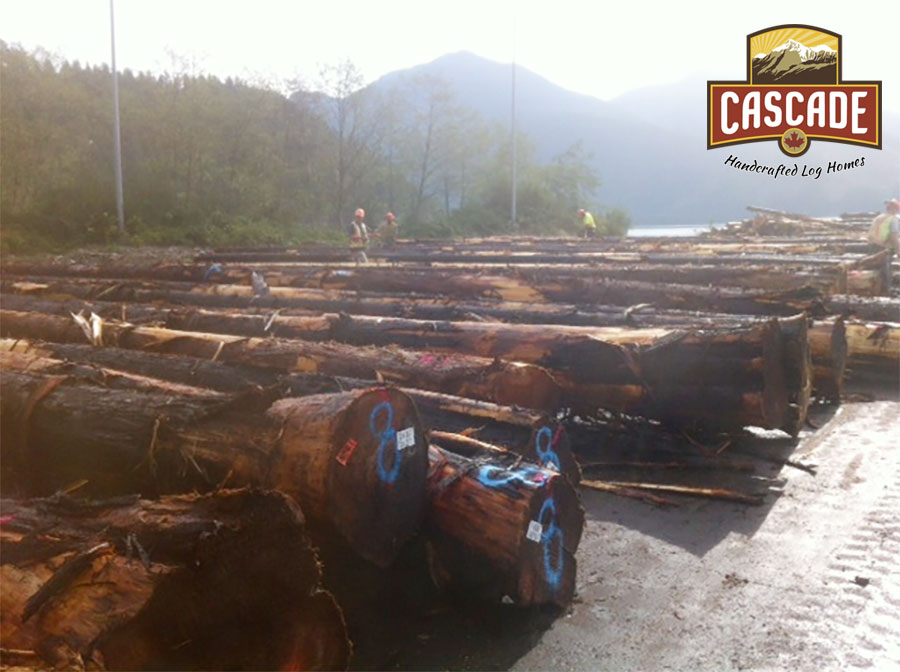 Cascade Handcrafted Log Homes - Sorting Logs
