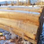 Latewood log finish