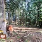 CascadCascade Selective Harvestinge-selective-harvest