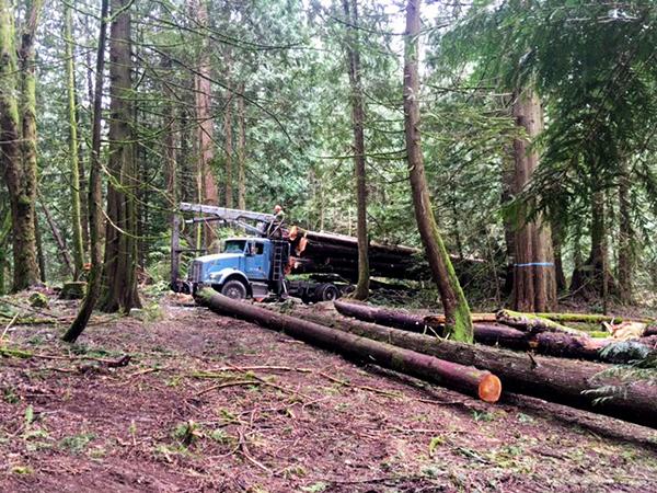 selective-harvesting-western-red-cedar