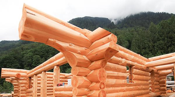 western-red-cedar-log-flare