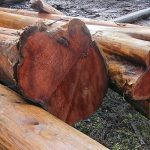 Western Red-cedar Log Flares